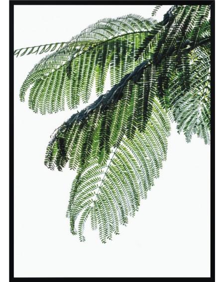 Plakat w ramie Palm Leaf 50x70