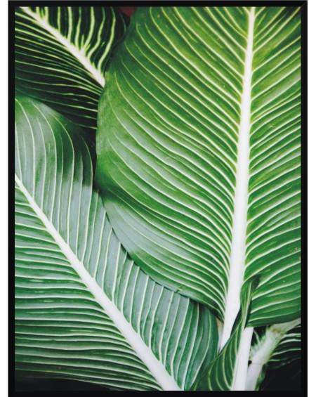 Plakat w ramie Leaf 50x70