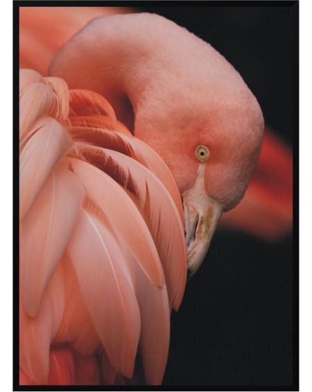 Plakat w ramie Flamingo 50x70